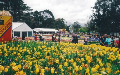 Bowral Tulip Gardens and Berrima Antiques & Crafts